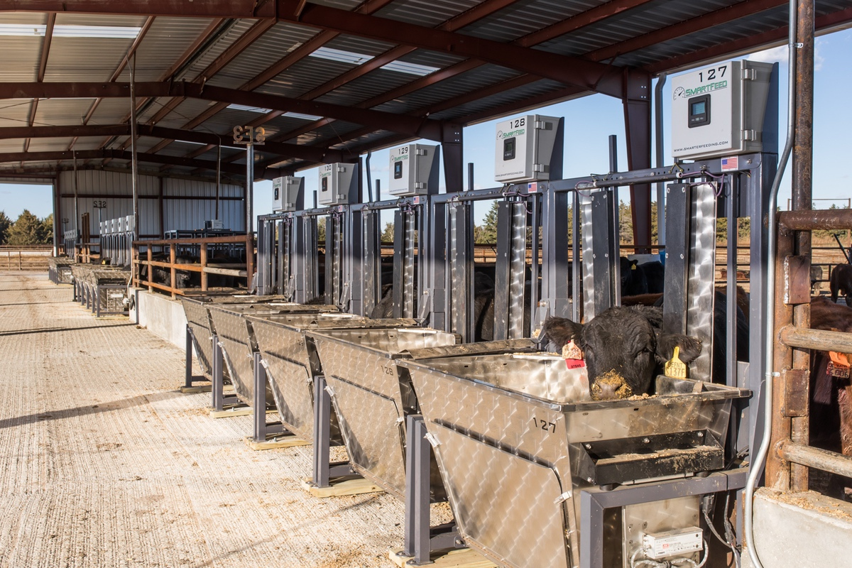 SmartFeed in use at Feedlot